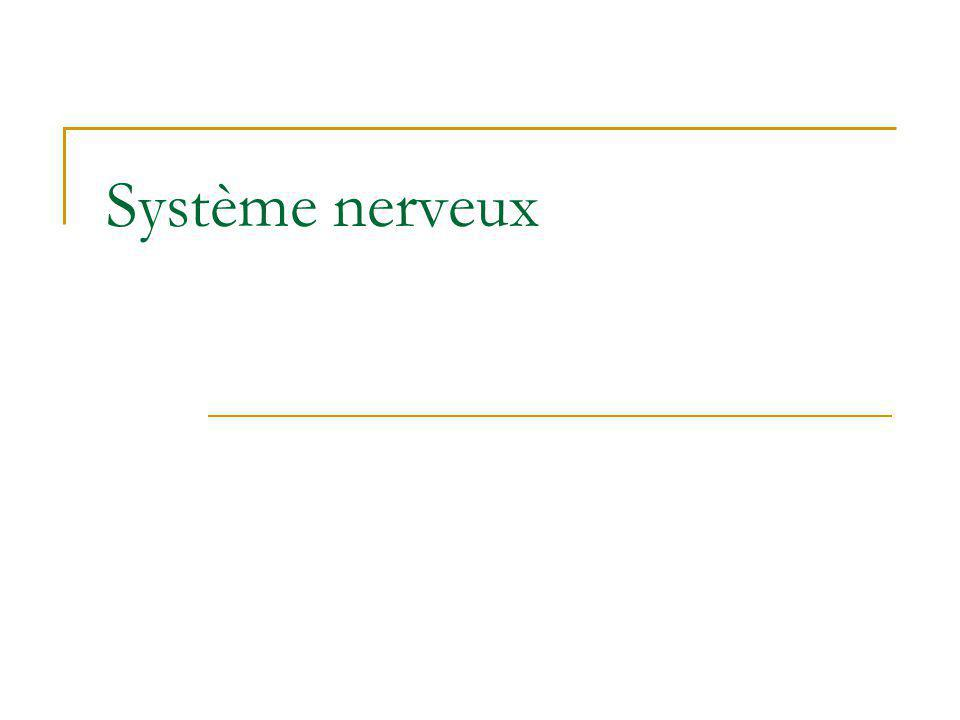 Neurophysiologie Potentiels gradués Marieb, 1999