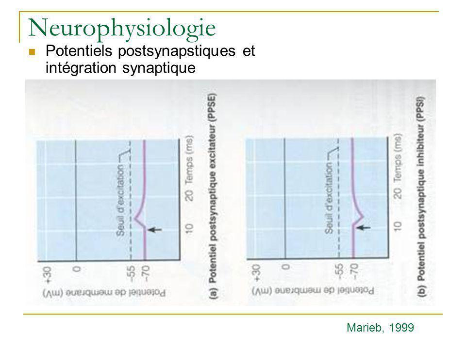 Neurophysiologie Potentiels postsynapstiques et intégration synaptique Marieb, 1999
