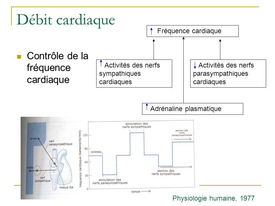 Débit cardiaque Contrôle de la fréquence cardiaque Fréquence cardiaque Activités des nerfs sympathiques cardiaques Activités des nerfs parasympathiques cardiaques Adrénaline plasmatique Physiologie humaine, 1977