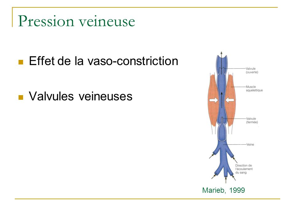 Pression veineuse Effet de la vaso-constriction Valvules veineuses Marieb, 1999