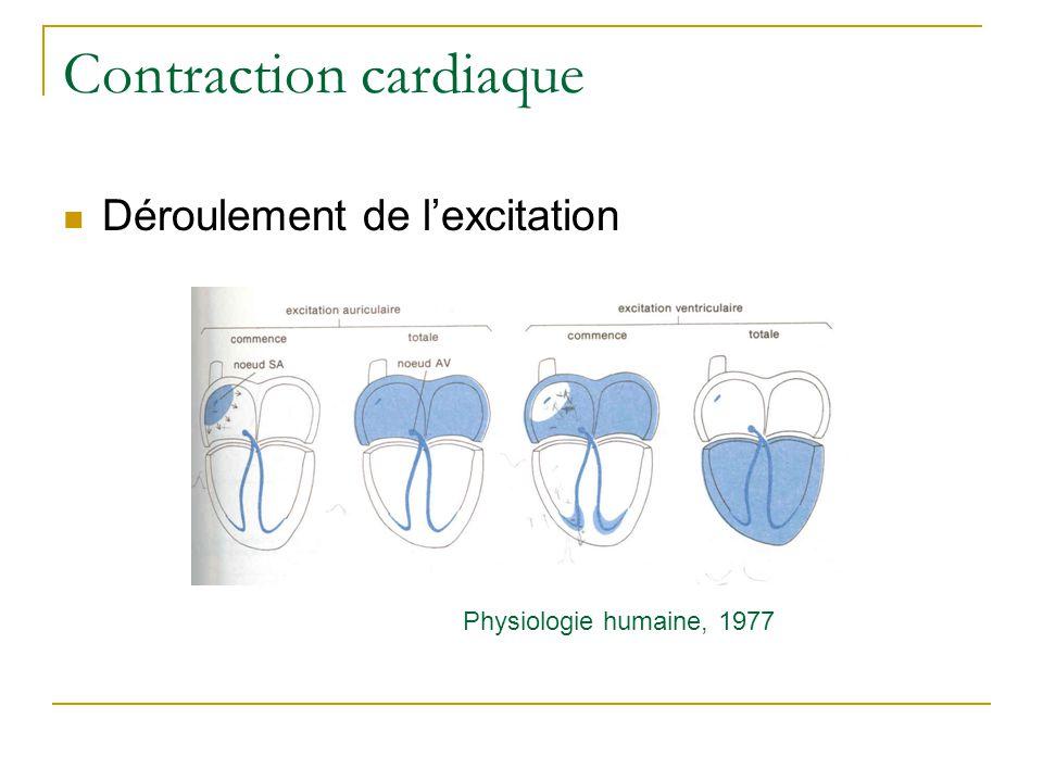 Contraction cardiaque Déroulement de lexcitation Physiologie humaine, 1977