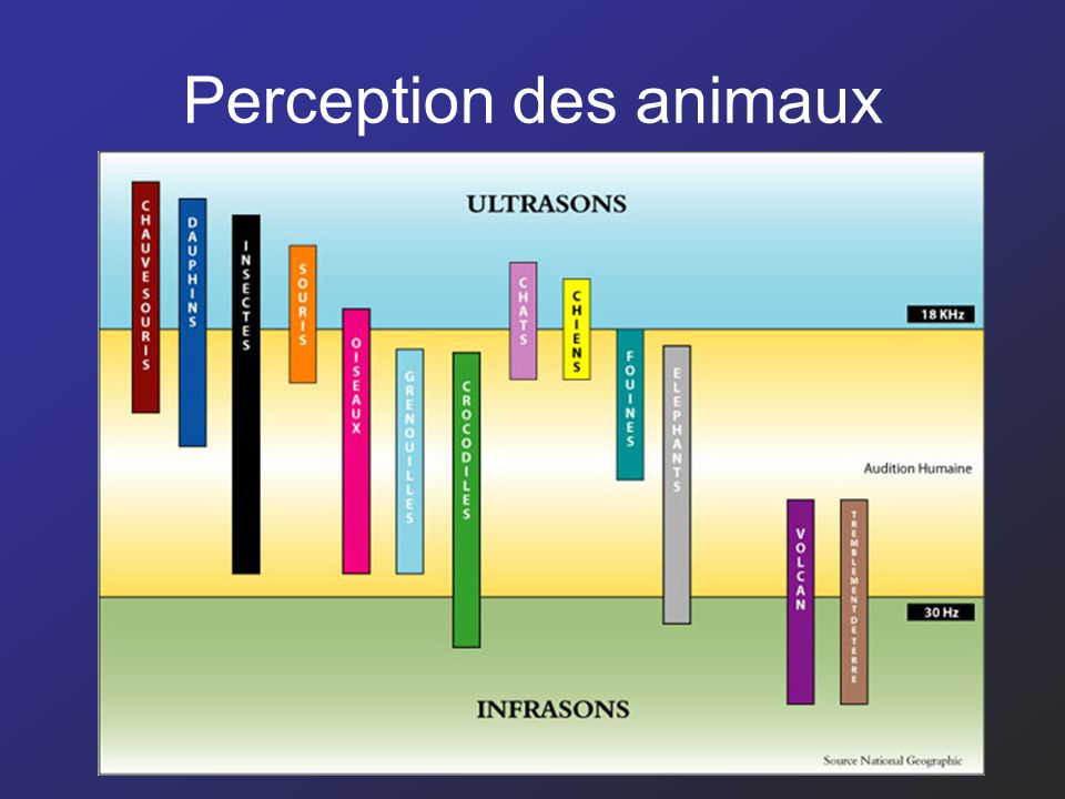 Perception des animaux 15
