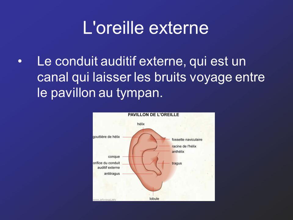 L'oreille externe Le conduit auditif externe, qui est un canal qui laisser les bruits voyage entre le pavillon au tympan.