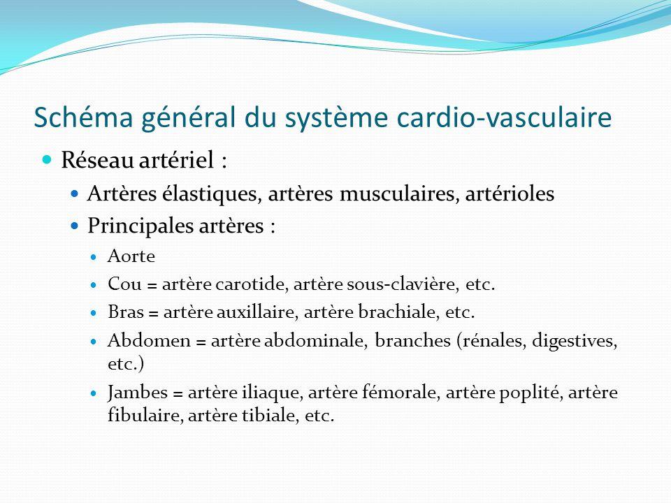Schéma général du système cardio-vasculaire Réseau artériel : Artères élastiques, artères musculaires, artérioles Principales artères : Aorte Cou = artère carotide, artère sous-clavière, etc.