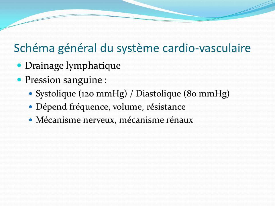 Schéma général du système cardio-vasculaire Drainage lymphatique Pression sanguine : Systolique (120 mmHg) / Diastolique (80 mmHg) Dépend fréquence, volume, résistance Mécanisme nerveux, mécanisme rénaux