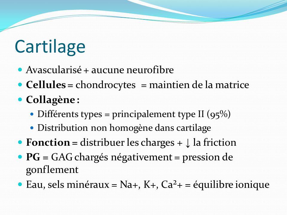 Cartilage Avascularisé + aucune neurofibre Cellules = chondrocytes = maintien de la matrice Collagène : Différents types = principalement type II (95%
