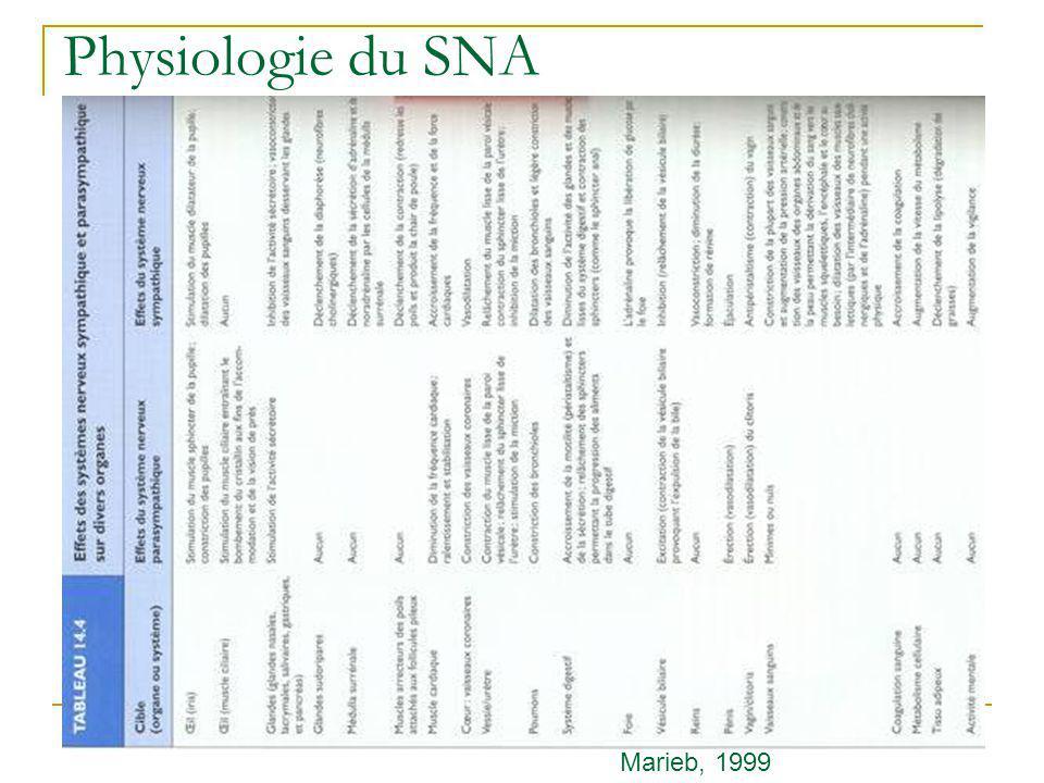 Physiologie du SNA Marieb, 1999