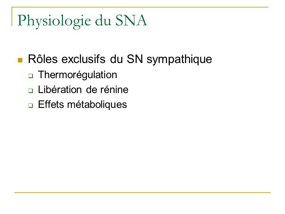 Physiologie du SNA Rôles exclusifs du SN sympathique Thermorégulation Libération de rénine Effets métaboliques