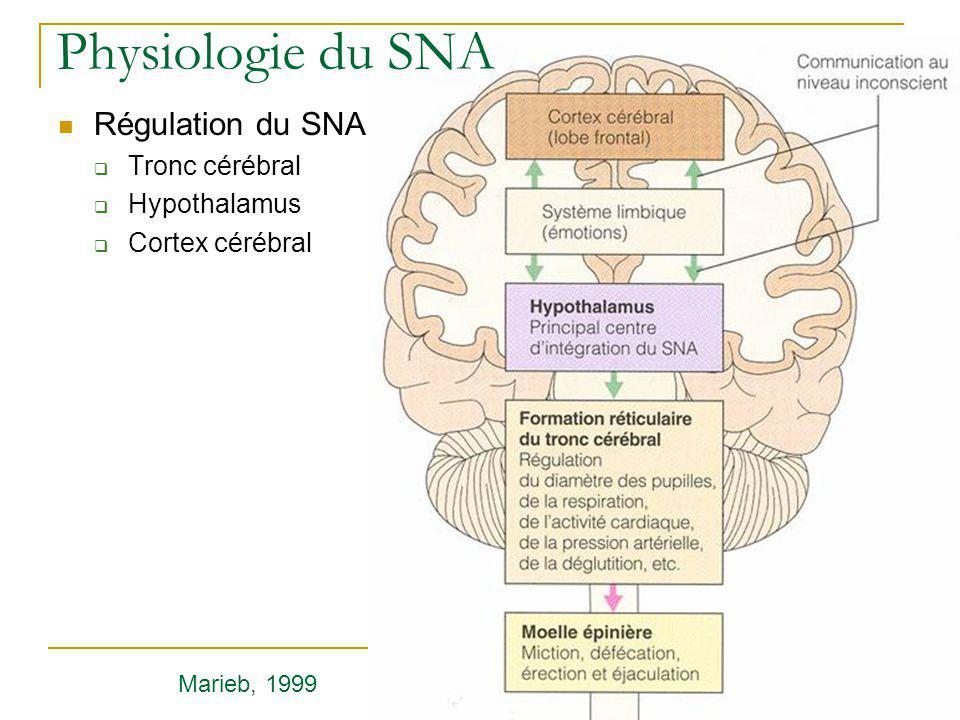 Physiologie du SNA Régulation du SNA Tronc cérébral Hypothalamus Cortex cérébral Marieb, 1999