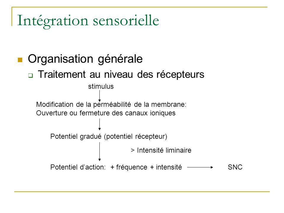Intégration sensorielle Organisation générale Traitement au niveau des récepteurs stimulus Modification de la perméabilité de la membrane: Ouverture o