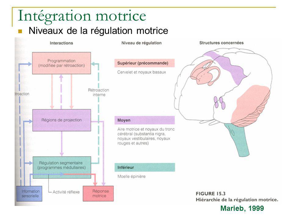 Intégration motrice Niveaux de la régulation motrice Marieb, 1999