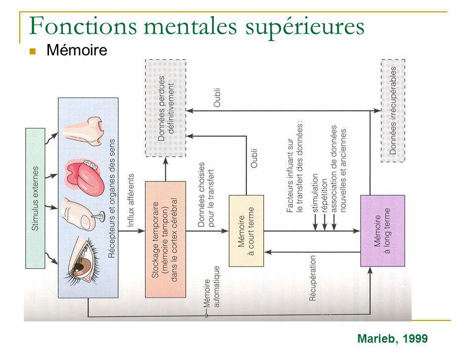 Fonctions mentales supérieures Mémoire Marieb, 1999