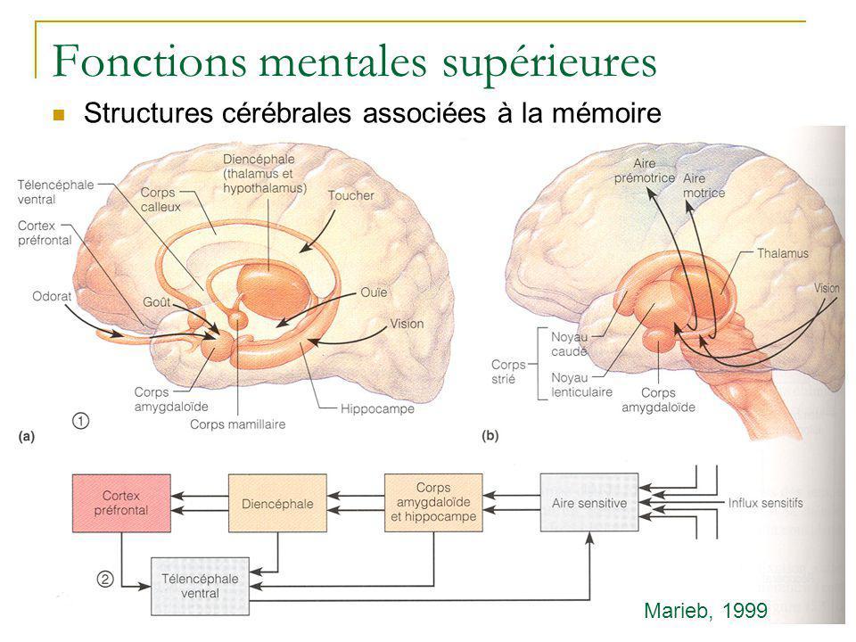 Fonctions mentales supérieures Structures cérébrales associées à la mémoire Marieb, 1999