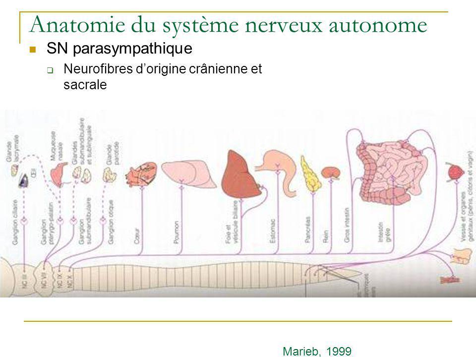 Anatomie du système nerveux autonome SN parasympathique Neurofibres dorigine crânienne et sacrale Marieb, 1999