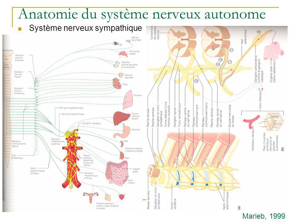 Anatomie du système nerveux autonome Système nerveux sympathique Marieb, 1999