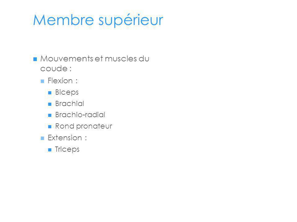 Membre supérieur Mouvements et muscles du coude : Flexion : Biceps Brachial Brachio-radial Rond pronateur Extension : Triceps