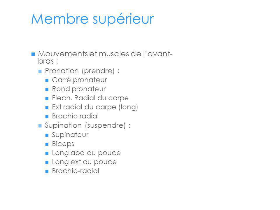 Membre supérieur Mouvements et muscles de lavant- bras : Pronation (prendre) : Carré pronateur Rond pronateur Flech.