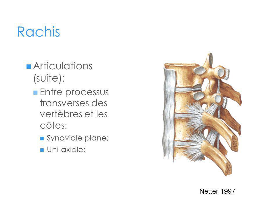 Rachis Articulations (suite): Entre processus transverses des vertèbres et les côtes: Synoviale plane; Uni-axiale; Netter 1997