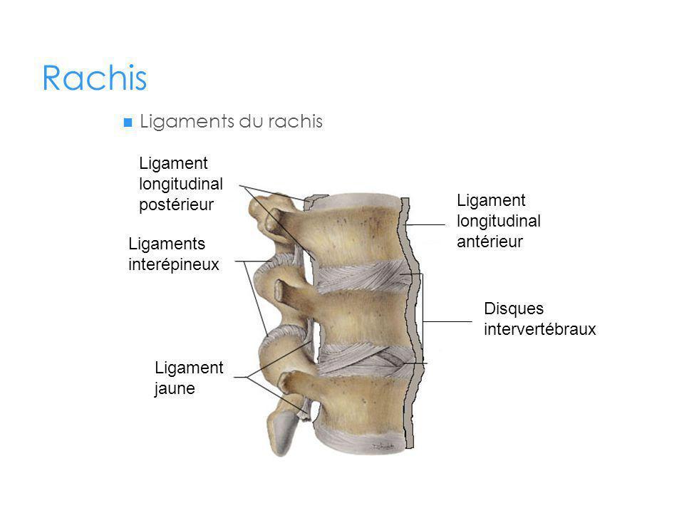Rachis Ligaments du rachis Ligament longitudinal antérieur Disques intervertébraux Ligament longitudinal postérieur Ligaments interépineux Ligament jaune
