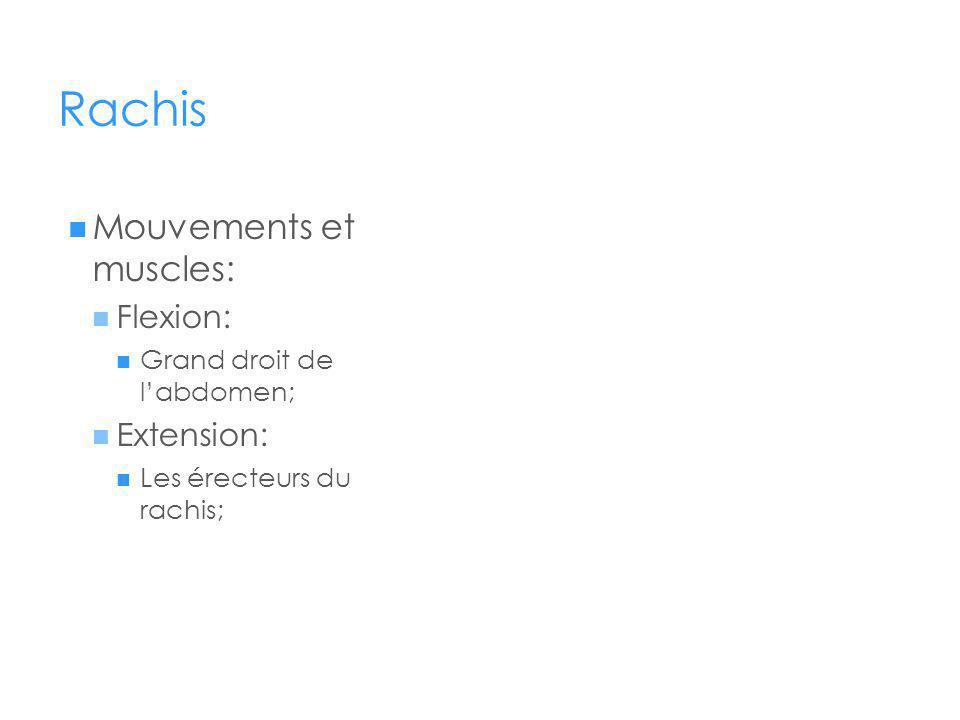 Rachis Mouvements et muscles: Flexion: Grand droit de labdomen; Extension: Les érecteurs du rachis;