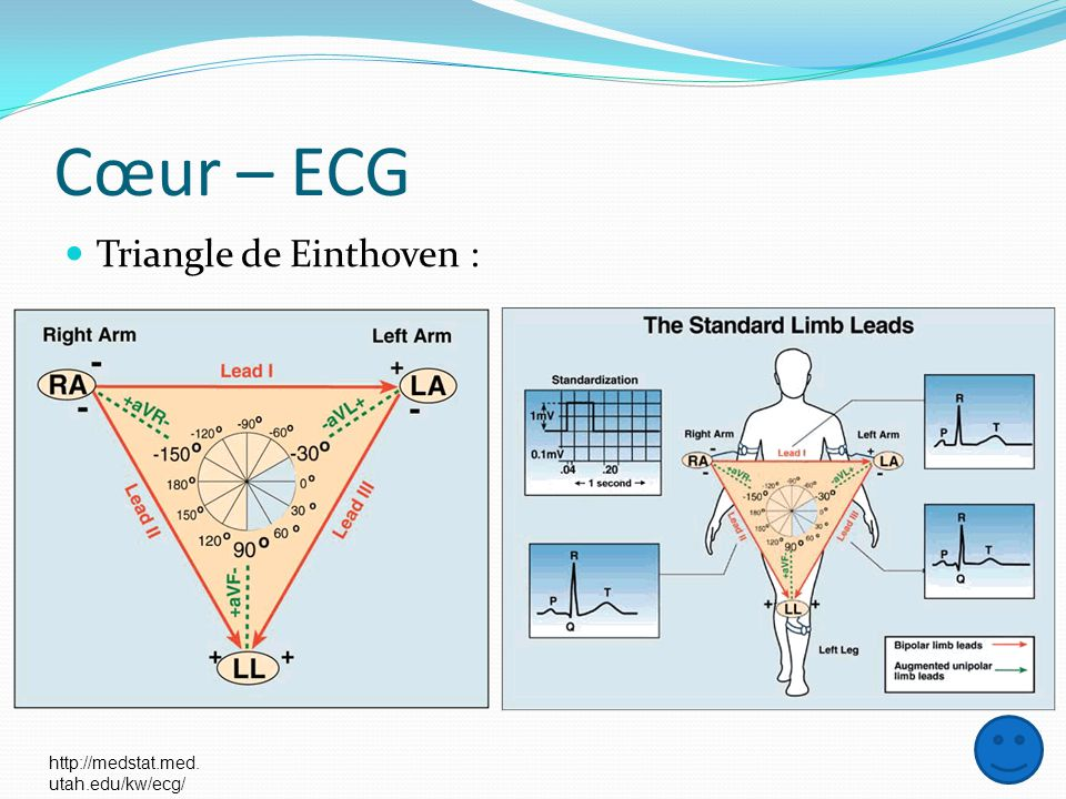 Cœur – ECG Triangle de Einthoven : http://medstat.med. utah.edu/kw/ecg/