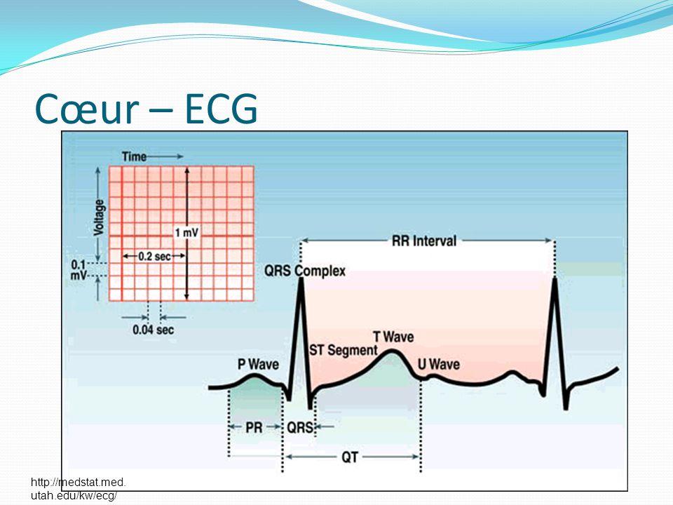 Cœur – ECG http://medstat.med. utah.edu/kw/ecg/