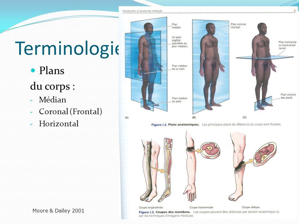 Terminologies Plans du corps : - Médian - Coronal (Frontal) - Horizontal Moore & Dailey 2001