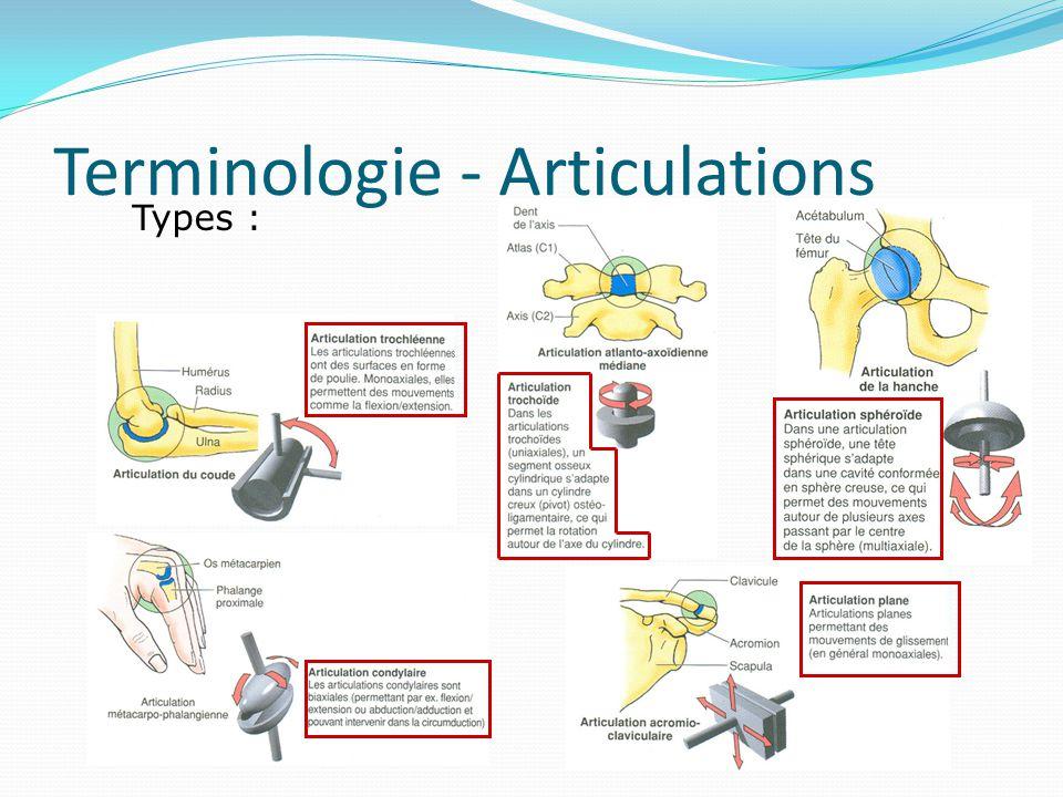 Terminologie - Articulations Types :