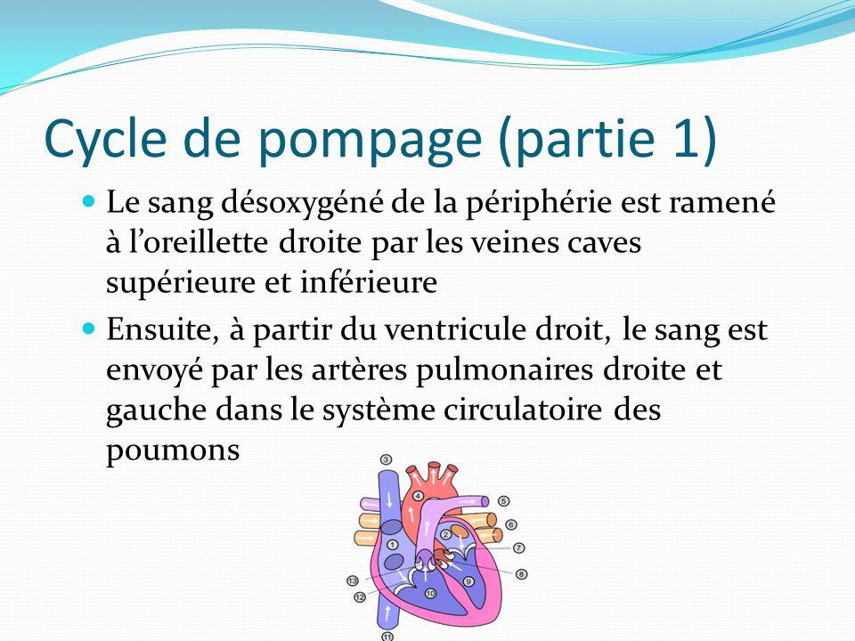 Cycle de pompage (partie 1) Le sang désoxygéné de la périphérie est ramené à loreillette droite par les veines caves supérieure et inférieure Ensuite,