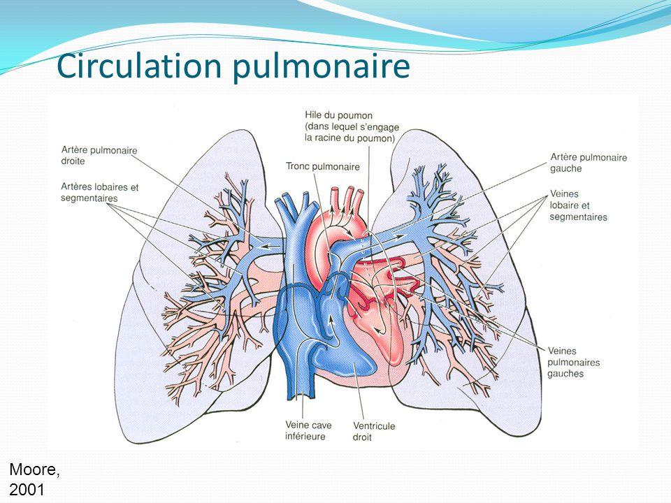 Circulation pulmonaire Moore, 2001