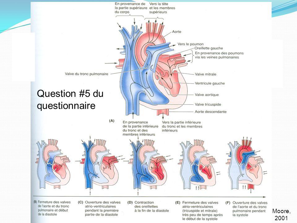 Cœur – rappel Circulation (suite): Moore, 2001 Question #5 du questionnaire