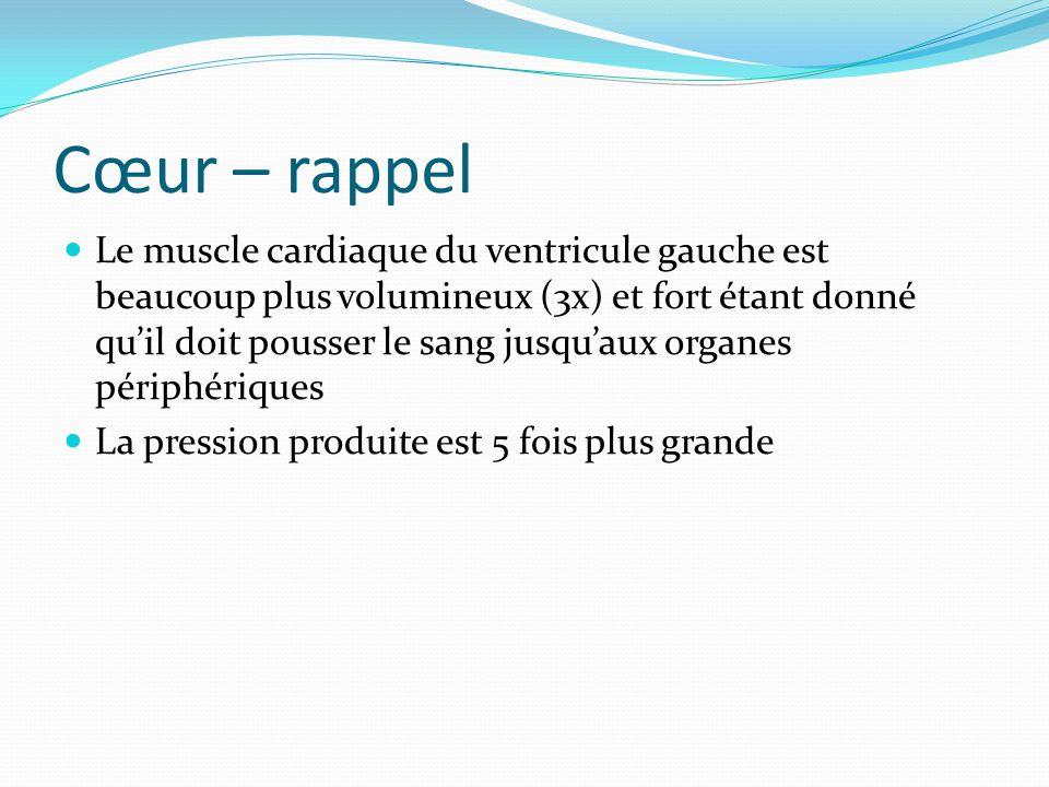 Cœur – rappel Le muscle cardiaque du ventricule gauche est beaucoup plus volumineux (3x) et fort étant donné quil doit pousser le sang jusquaux organe