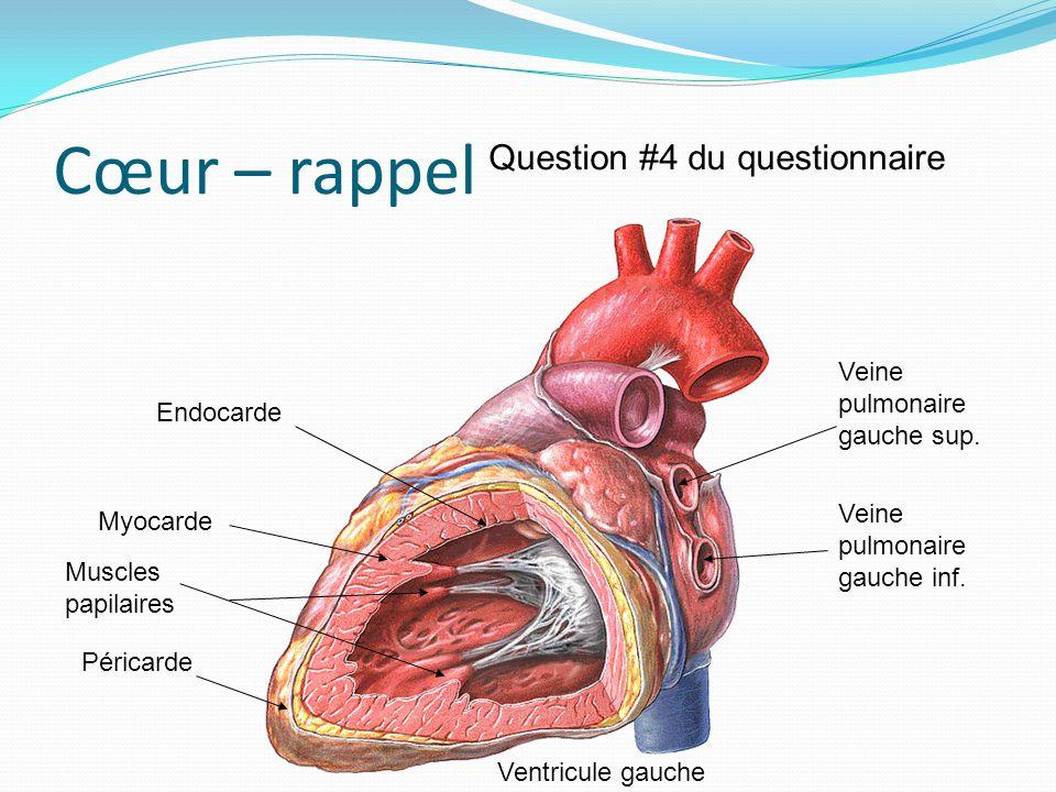 Cœur – rappel Veine pulmonaire gauche inf. Veine pulmonaire gauche sup. Ventricule gauche Endocarde Myocarde Péricarde Question #4 du questionnaire Mu
