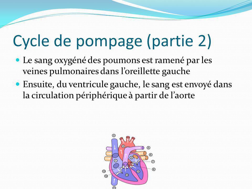 Cycle de pompage (partie 2) Le sang oxygéné des poumons est ramené par les veines pulmonaires dans loreillette gauche Ensuite, du ventricule gauche, l