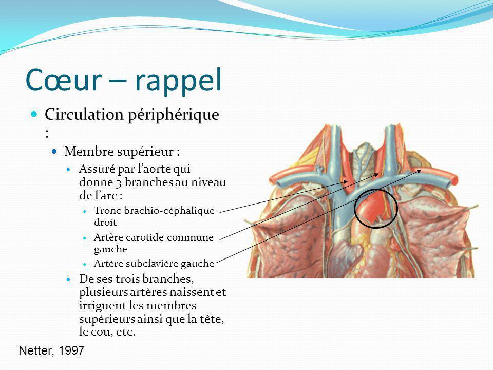 Cœur – rappel Circulation périphérique : Membre supérieur : Assuré par laorte qui donne 3 branches au niveau de larc : Tronc brachio-céphalique droit