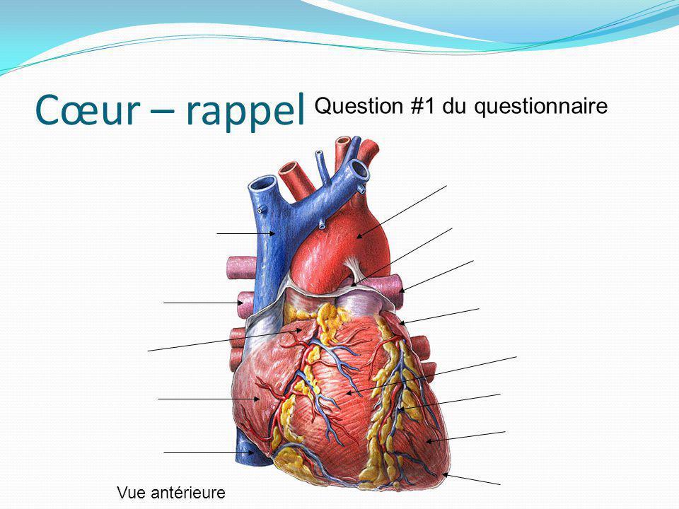 Cœur – rappel Vue antérieure Question #1 du questionnaire