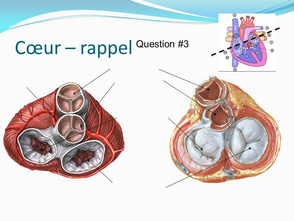 Cœur – rappel Question #3