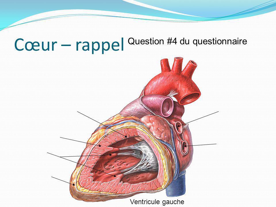 Cœur – rappel Ventricule gauche Question #4 du questionnaire