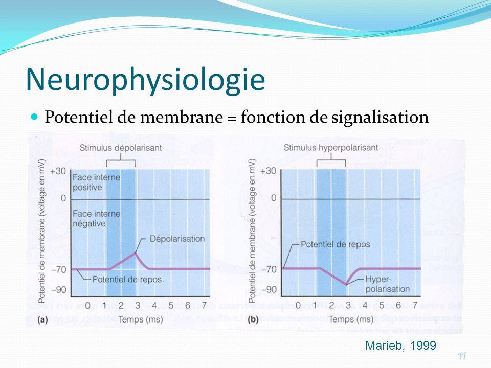 Neurophysiologie Potentiel de membrane = fonction de signalisation Marieb, 1999 11