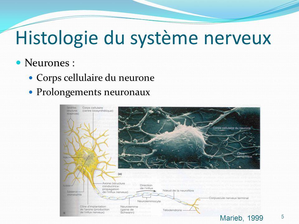 Histologie du système nerveux Neurones : Corps cellulaire du neurone Prolongements neuronaux Marieb, 1999 5