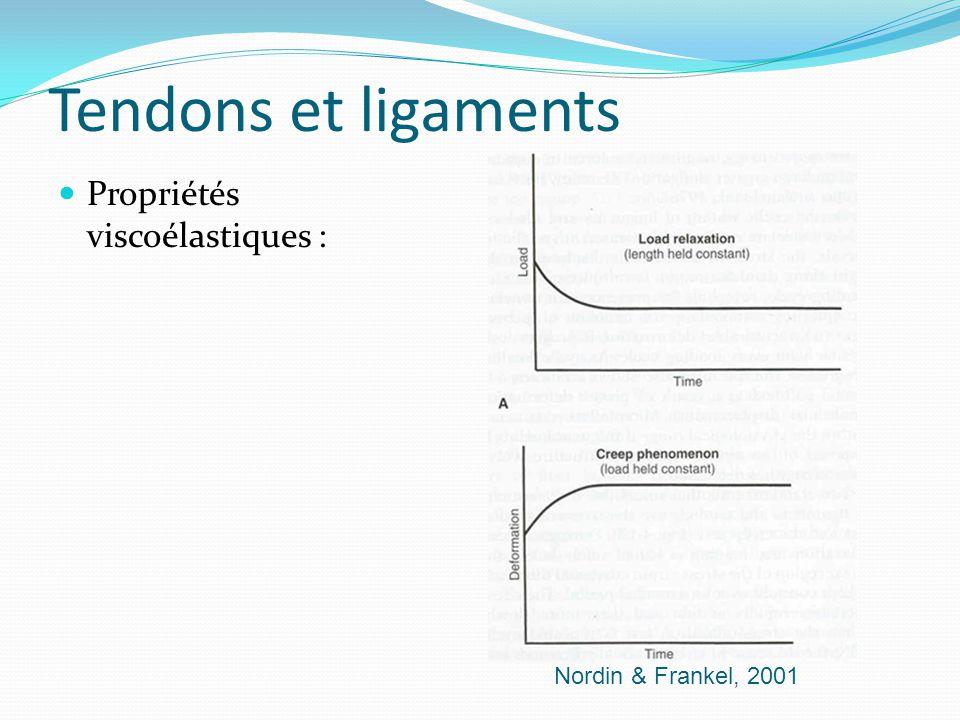 Tendons et ligaments Propriétés viscoélastiques : Nordin & Frankel, 2001