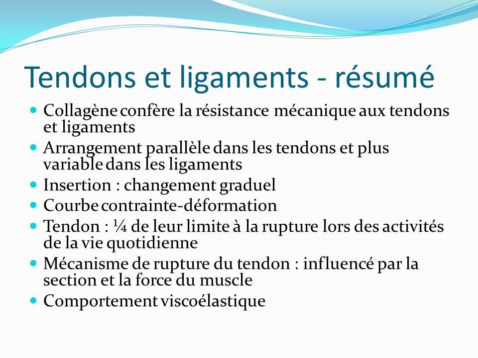 Tendons et ligaments - résumé Collagène confère la résistance mécanique aux tendons et ligaments Arrangement parallèle dans les tendons et plus variab