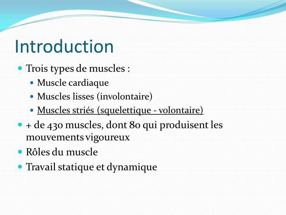 Introduction Trois types de muscles : Muscle cardiaque Muscles lisses (involontaire) Muscles striés (squelettique - volontaire) + de 430 muscles, dont