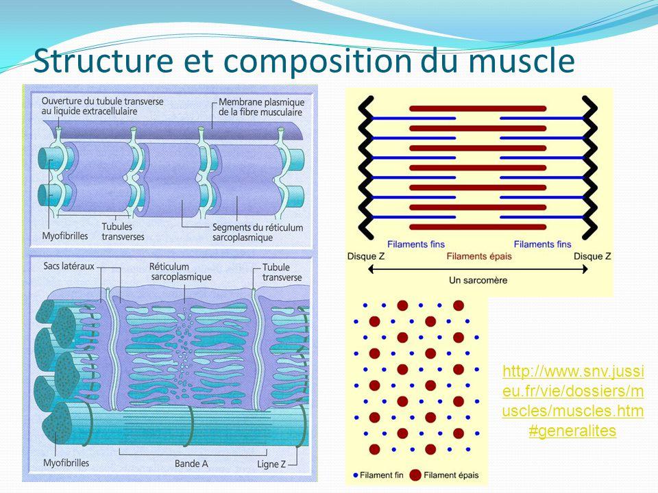 Structure et composition du muscle http://www.snv.jussi eu.fr/vie/dossiers/m uscles/muscles.htm #generalites
