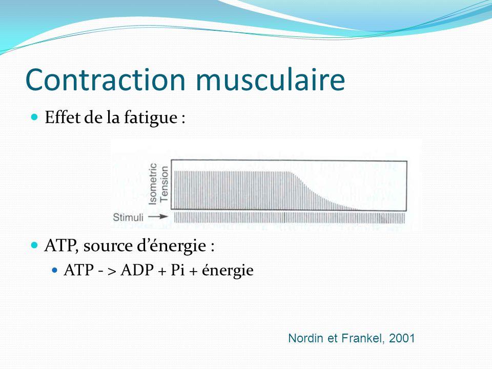 Contraction musculaire Effet de la fatigue : ATP, source dénergie : ATP - > ADP + Pi + énergie Nordin et Frankel, 2001