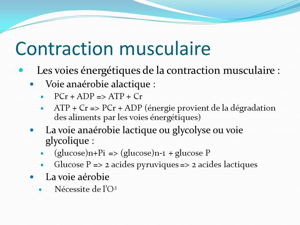 Contraction musculaire Les voies énergétiques de la contraction musculaire : Voie anaérobie alactique : PCr + ADP => ATP + Cr ATP + Cr => PCr + ADP (é