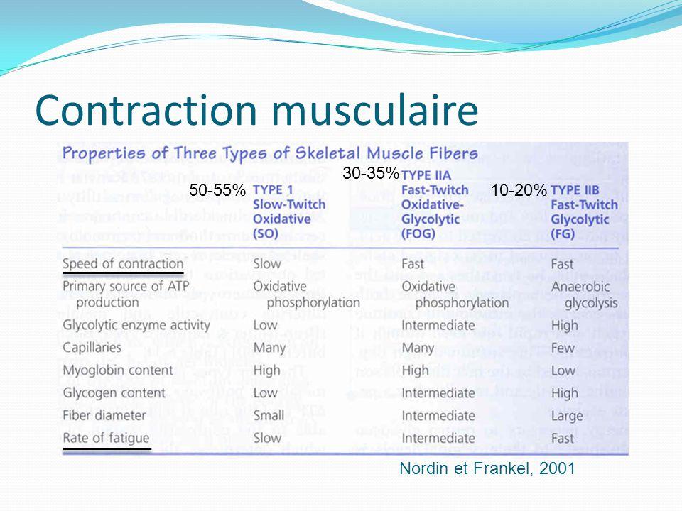 Contraction musculaire Nordin et Frankel, 2001 50-55% 30-35% 10-20%