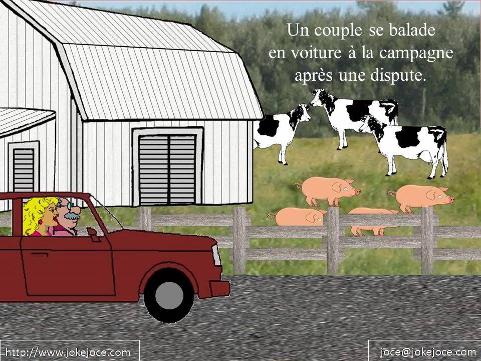 Un couple se balade en voiture à la campagne après une dispute.