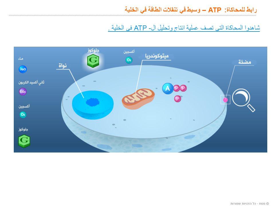 رابط للمحاكاة: ATP – وسيط في تنقلات الطاقة في الخلية شاهدوا المحاكاة التي تصف عملية انتاج وتحليل ال- ATP في الخلية.