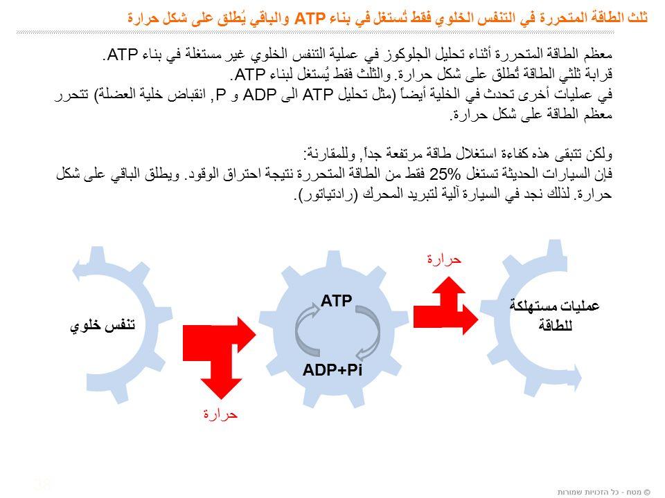 38 ثلث الطاقة المتحررة في التنفس الخلوي فقط تُستغل في بناء ATP والباقي يُطلق على شكل حرارة معظم الطاقة المتحررة أثناء تحليل الجلوكوز في عملية التنفس الخلوي غير مستغلة في بناء ATP.